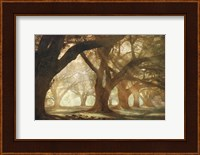 Oak Alley Morning Light Fine-Art Print