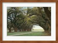 Alley Of The Oaks Fine-Art Print