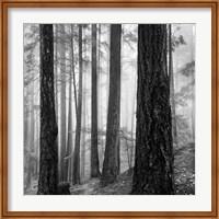 Photography Fine-Art Print