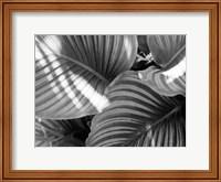 Leaf Abstract V Fine-Art Print