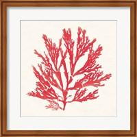 Pacific Sea Mosses I Red Fine-Art Print
