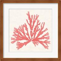 Pacific Sea Mosses IV Coral Fine-Art Print