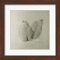 Pair of Skeleton Leaves Fine-Art Print