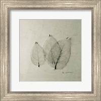 Trio of Skeleton Leaves Fine-Art Print