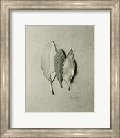 Serrated Trio Fine-Art Print