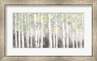 Soft Birches Charcoal Fine-Art Print