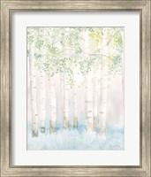 Soft Birches II Fine-Art Print