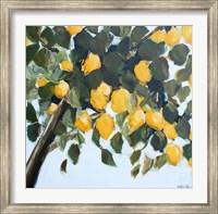Lemon Tree Fine-Art Print