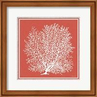 Coastal Coral on Red II Fine-Art Print