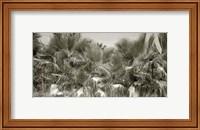Water Palms Crop Fine-Art Print