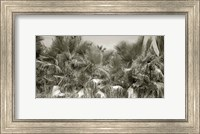 Water Palms Crop Fine-Art Print