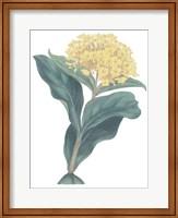Harlequin Floral Cool Fine-Art Print