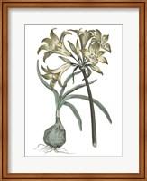 Vintage Floral I on White Fine-Art Print