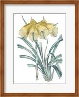 Antique Botanical XXIV Cool Fine-Art Print