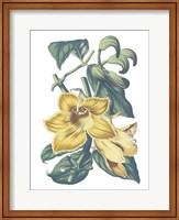 Antique Botanical XVIII Cool Fine-Art Print