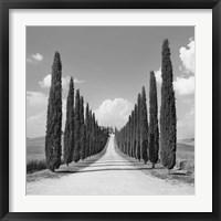 Cypress alley, San Quirico d'Orcia, Tuscany (detail) Fine-Art Print