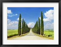 Cypress alley, San Quirico d'Orcia, Tuscany Fine-Art Print