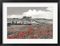 Farmhouse with Cypresses and Poppies, Val d'Orcia, Tuscany (BW) Fine-Art Print