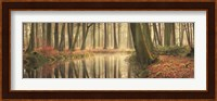 The Healing Power of Forests Fine-Art Print
