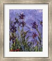 Iris Fine-Art Print