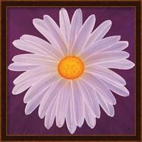 Daisy 9-3 Fine-Art Print