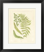 Ferns with Platemark III Fine-Art Print