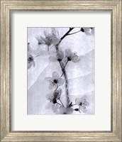 Cherry Blossoms in Winter Fine-Art Print