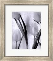 Tulips on Ice Fine-Art Print