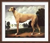 Greyhound in a Parkland Landscape Fine-Art Print
