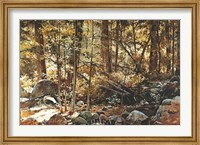 Sunlit Forest (Yosemite) Fine-Art Print