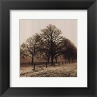 Row of Trees Fine-Art Print