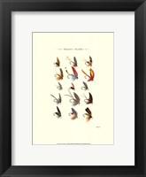 Trout Flies I Fine-Art Print