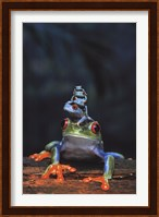 Frogs photo Wall Poster
