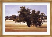 Montpellier Oak Fine-Art Print