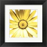 Yellow Daisy Fine-Art Print