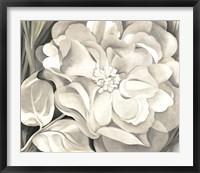 The White Calico Flower, 1931 Fine-Art Print