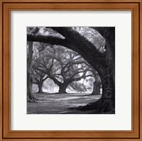 Oak Alley, West Row Fine-Art Print