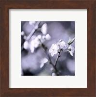 Cherry Blossoms II Fine-Art Print