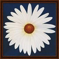 Daisy 123 - 2004 Fine-Art Print