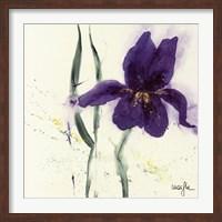 Iris II Fine-Art Print