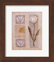 White Tulip Montage Fine-Art Print