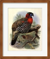 Native Pheasant I Fine-Art Print