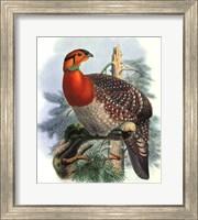 Native Pheasant II Fine-Art Print