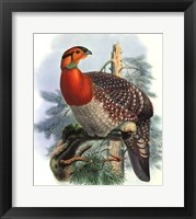 Native Pheasant II Fine-Art Print