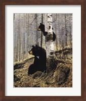 In The Adirondacks Fine-Art Print