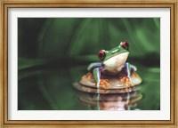 Red-Eyed Tree Frog Fine-Art Print