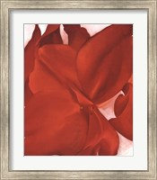Red Cannas Fine-Art Print