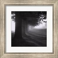 Misty Trees Fine-Art Print