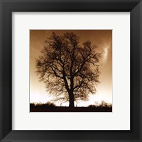 Winter Tree No. 1 Fine-Art Print