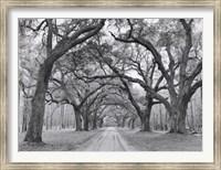 Oak Arches Fine-Art Print